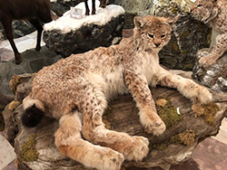 La collezione naturalistica di animali