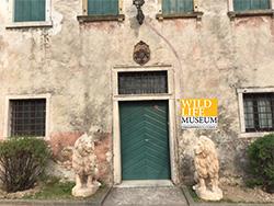 Wild Life Museum